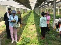 C53-有機與自然農法田間實作班